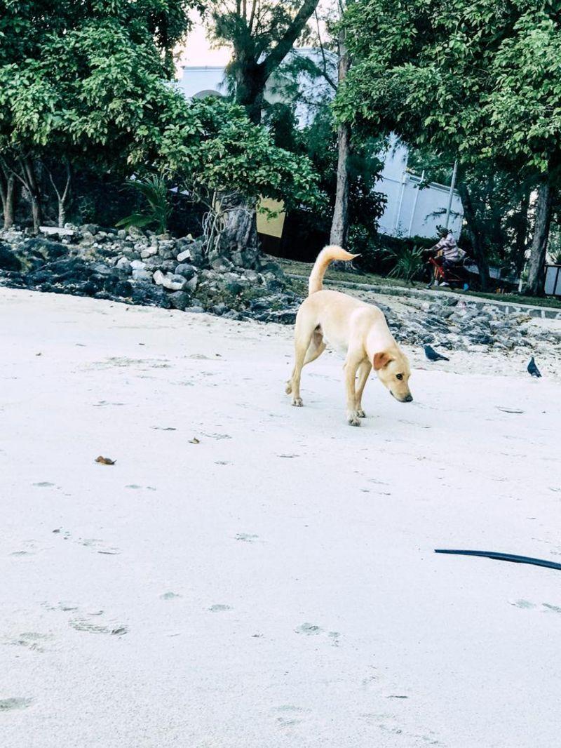 streunender Hund am Strand