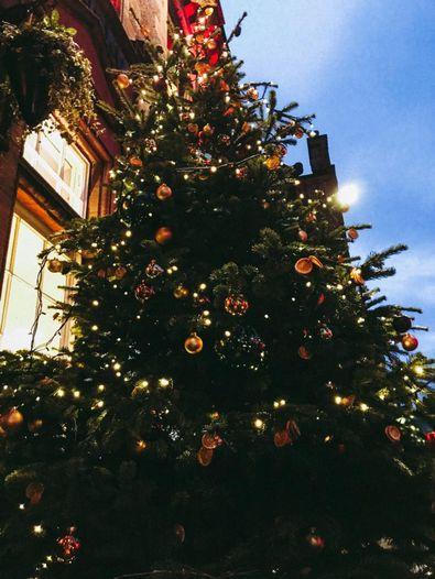 Weihnachtsbaum in Edinburgh